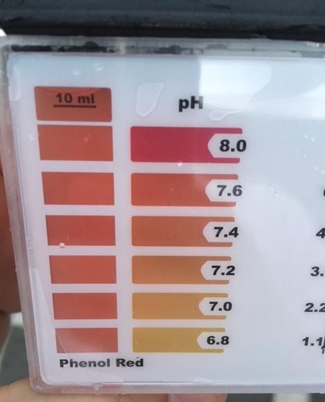 Pooltest pH-Wert danach